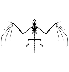 Bat skeleton silhouette vector