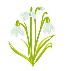 cartoon snowdrop spring flower vector image