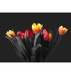 Colorful bouquet of tulips vector image