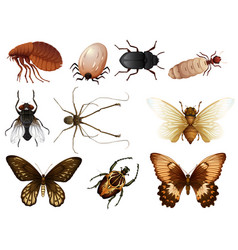 Set of bug and insect vector