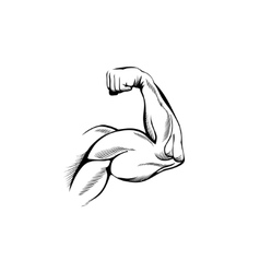 arm muscles vector image vector image