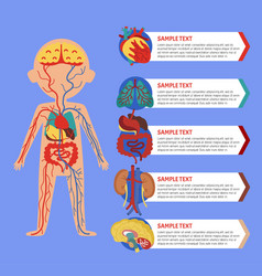 health poster with human body anatomy vector image