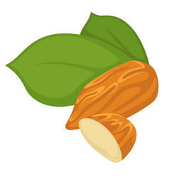 almond nut whole piece and slice with leaf vector image