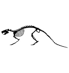 Rat skeleton vector
