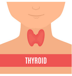 Thyroid gland of a man vector