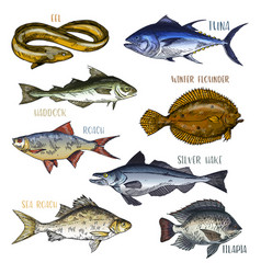 Trophy signboards with sea and river fish vector
