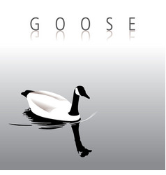 A lovely tranquil goose swimming vector