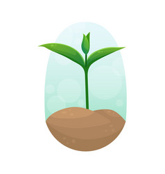 A young sprout in clump soil seedling vector