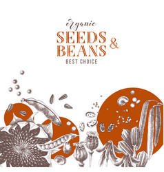 background with hand drawn seeds and beans vector image