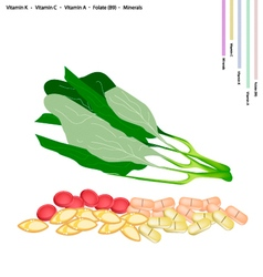 Fresh Chinese Broccoli with Vitamin K C A and B9 vector image