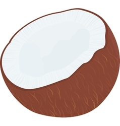 half of tropical fruit coconut isolated on vector image