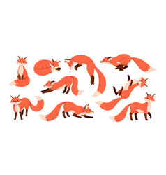 Set cute red foxes with black paws isolated vector