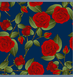beautiful red rose - rosa on indigo blue vector image vector image