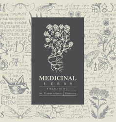 Beautiful label or banner for field thyme vector