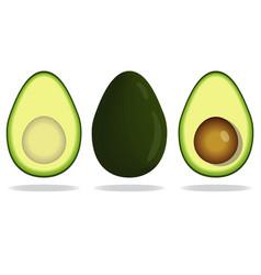 Realistic avocado set vector