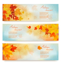 Three abstract autumn banners with color leaves vector image