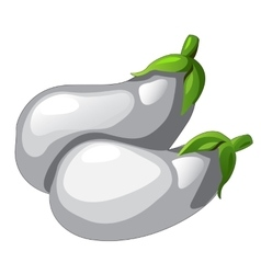Two white eggplants picked from garden vector image
