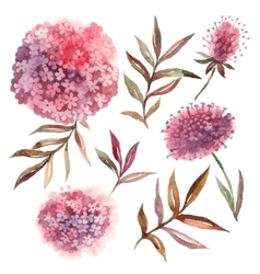 Watercolor floral set Collection with leaves and vector