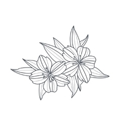 Wild Flower Monochrome Drawing For Coloring Book vector image