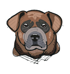 labrador retriever head vector image