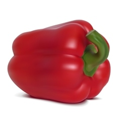 Red sweet pepper vector