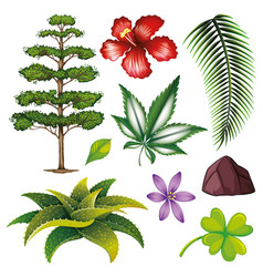 Set isolated objects theme nature vector