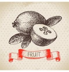 Hand drawn sketch fruit feijoa Eco food vector image vector image