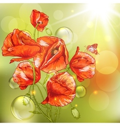 Bunch of Beautiful Red Poppy with Lights vector image