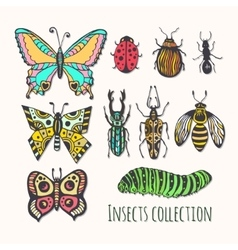 Colorful insects collection Hand drawn set for vector