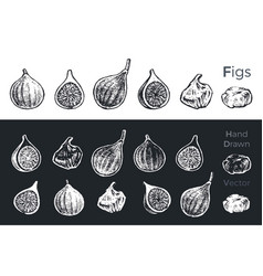 hand drawn fig icons vector image