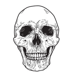 human skull black and white hand drawn vector image