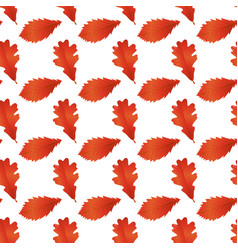red autumn leaves white background image vector image