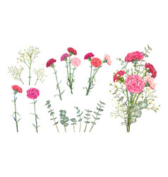 Set carnation flowers vector