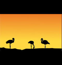 silhouette flamingo at sunset scenery vector image vector image
