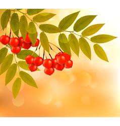 Autumn background with leaves and rowan Back to vector