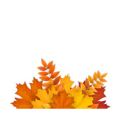 bouquet fallen autumn leaves vector image