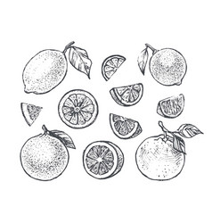 citrus icons set with lemon orange and lime vector image