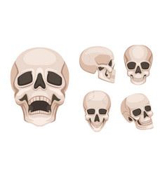 Human skull at different sides monochrome vector