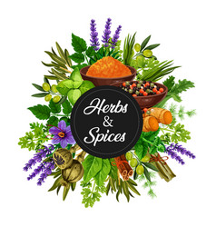 Organic herbs and spices seasonings bunch vector