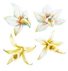 Watercolor white and yellow orchids vector