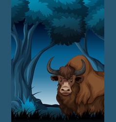 Yak in the dark forest vector