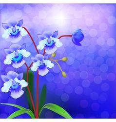 Bush Orchid violet on a luminous vector