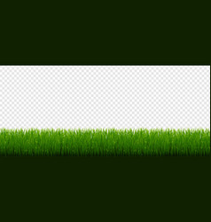 Green grass border and transparent background vector