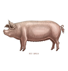 Pig hand draw vintage engraving style clip art vector