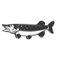 pike fish icon isolated on white background vector image