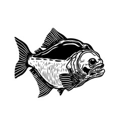 Piranha fish isolated on white background design vector
