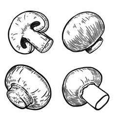 set of hand drawn mushrooms design elements for vector image