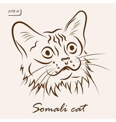 Somali cat vector image vector image