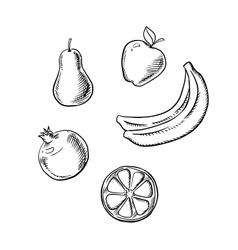 Apple pear lemon banana and pomegranate vector image vector image