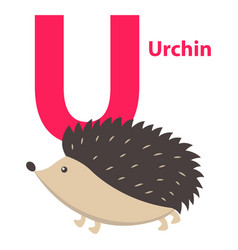 Barbed cute urchin on alphabet poster character u vector